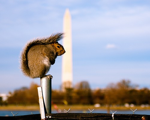 Squirrel Perched (by Nicolas Suzor)